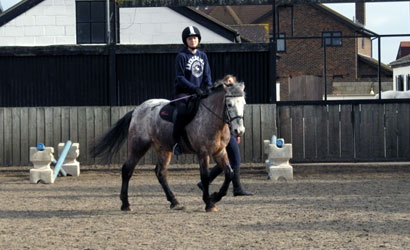 spanish bit adult and child riding lessons